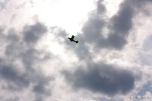 Parkzone Super Decathlon BL в небе